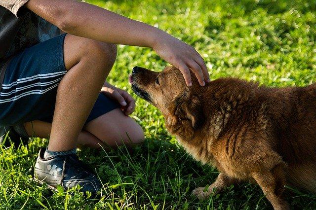 dítě hladící psa