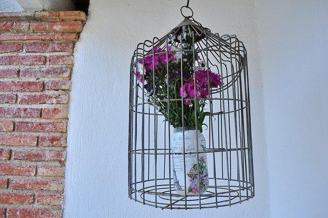 květina v kleci