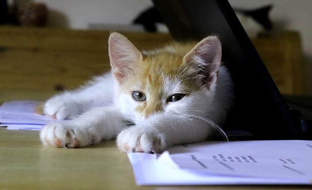 kočka na papírech