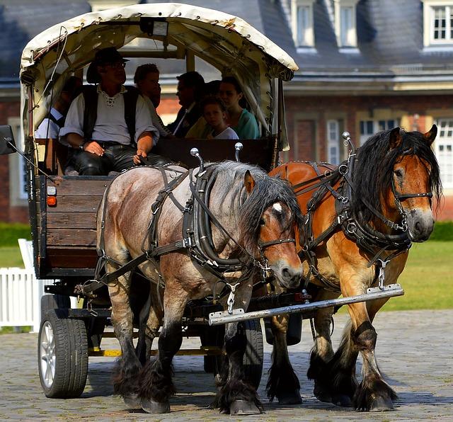 kůň táhnoucí starý vůz s turisty